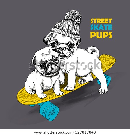 2e05e67e944 Pugs puppies in a knitted hat with pom-pom on a skateboard. Vector  illustration
