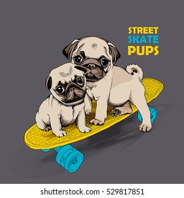 Pugs puppies on a skateboard. Vector illustration.