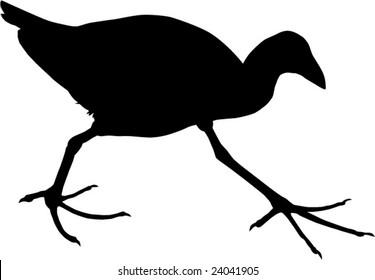 The Pukeko or New Zealand Swamp Hen