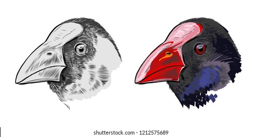 The pukeko swamp chicken New Zealand bird