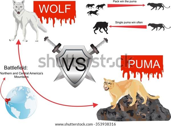 Cena fabryczna nieźle kup sprzedaż Puma Vs Wolf Infographic Illustration Stock Vector (Royalty ...