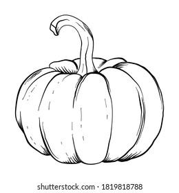 Pumpkin black and white icon. Doodle Pumpkin sketch. Vector illustration of vegetable outline. Simple monochrome image. Hand drawn ink illustration