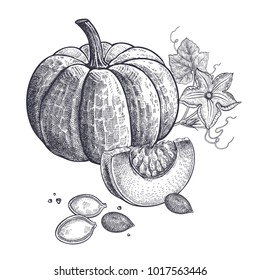 Pumpkin, flower and seeds realistic isolated. Vector illustration of food. Vintage engraving art. Hand drawing plants. Black and white sketch.