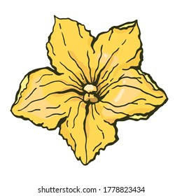 Pumpkin flower. Vector color illustration of a hand-drawn drawing with a black outline on a white background.