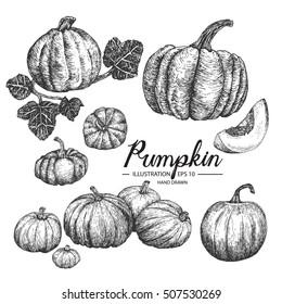 Pumpkin - fruit/vegetable vector element collection via hand drawn illustration. Ink and pen sketch set.