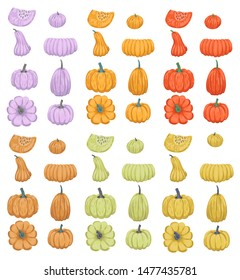 Pumpkin, gourd, squash. Autumn, Halloween and Thanksgiving. Elements for design. Isolated objects on a white background. Vector cartoon flat drawing.
