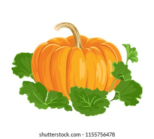 Pumpkin with green leaves isolated on white background. Vector illustration of fresh vegetable in a flat style.