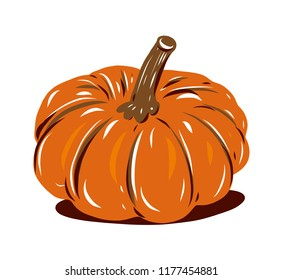 Pumpkin. Hand drawn vector illustration. Sketch illustration. Isolated on white background.