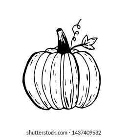 Pumpkin ink sketch isolated on white background. Hand drawn vector illustration in retro style.