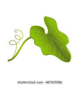 Pumpkin leaf, vector design
