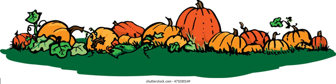 Pumpkin patch vector illustration on a white background