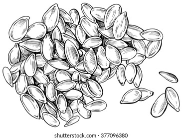 Pumpkin seeds - hand drawn vector illustration, isolated on white