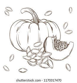 Pumpkin and seeds realistic isolated. Vector illustration of food. Hand drawing plants.