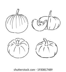 Pumpkin vector drawing set. Isolated outline vegetable, plant, leaves, flower and seeds. Hand drawn harvest illustration.