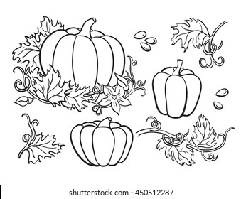 Pumpkin vector drawing set. Isolated outline  vegetable, plant, leaves, flower and seeds. Hand drawn harvest illustration.