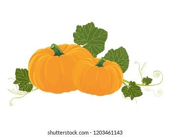 Pumpkin. Vector illustration