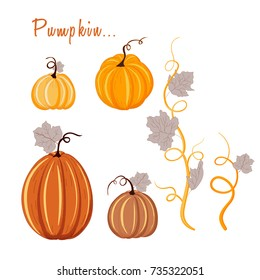 Pumpkin vector set isolated on a white background