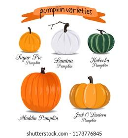 Pumpkin Vector Varieties
