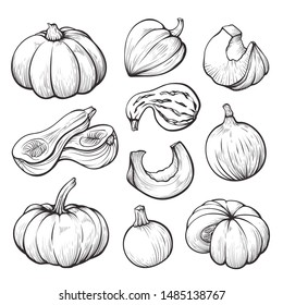 Pumpkin whole and halves hand drawn illustrations set. Traditional autumn harvest engravings. Pumpkin slices minimalist sketch. Ripe gourds of round, oval, oblong shapes. Agricultural produce