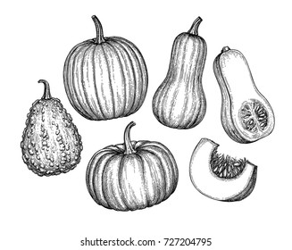 Pumpkins, butternut squash and gourd. Ink sketch collection isolated on white background. Hand drawn vector illustration. Retro style.