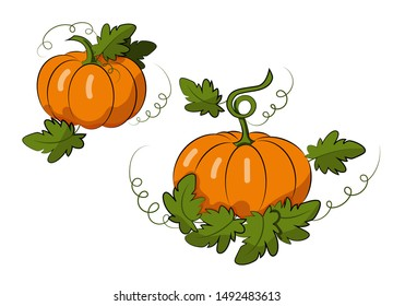 Pumpkins with leaves on a white background. Autumn harvest. Harvest Festival. Vegetables. Environmentally friendly product. Vector Illustration.
