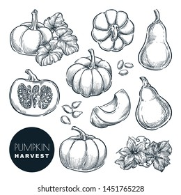 Pumpkins sketch vector illustration. Autumn gourd harvest. Hand drawn agriculture and farm isolated design elements.