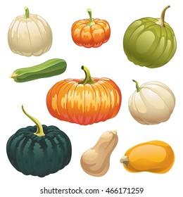 Pumpkins and squashes. Set of different kinds of pumpkins and squashes. Colorful picture.