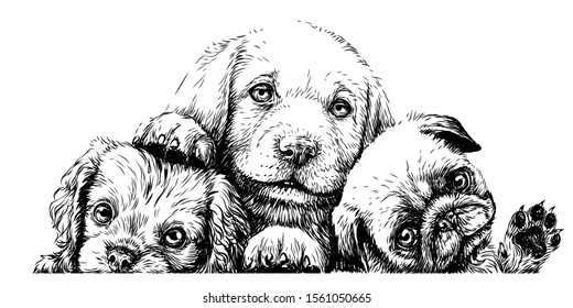 Puppies. Cavalier King Charles Spaniel, Labrador and Pug sketch wall sticker on a white background.