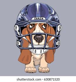 Puppy Basset Hound in a blue Handegg Helmet. Vector illustration.