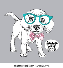 Puppy Beagle in a glasses and with a bow tie. Vector illustration.
