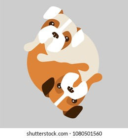 Puppy boxer gogs in a circle, Yin yang