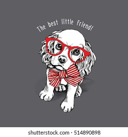 Puppy Cocker Spaniel in a red striped bow and with glasses on a gray background. Vector illustration.