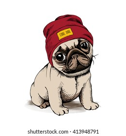 Puppy dog Pug in a hipster hat. Vector illustration.