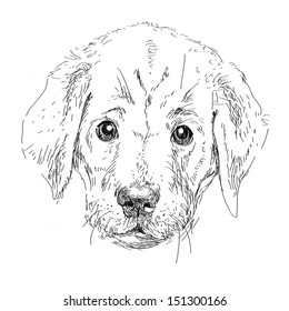Puppy labrador  head isolated  in vector
