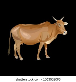 Pure indian cow. Side view. Vector illustration isolated on black background