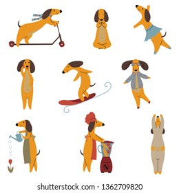 Purebred Brown Dachshund Dog Set, Funny Playful Pet Animals Cartoon Characters in Different Situations Vector Illustration
