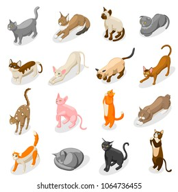 Purebred cats including scottish fold, bobtail, british, bombay and oriental breed isometric icons isolated vector illustration