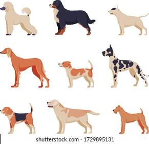 Purebred Dogs Collection, Beagle, Dalmatian, Labrador, Poodle, Greyhound Pet Animals, Labrador Retriever, Fox Terrier Pet Animals, Side View Vector Illustration