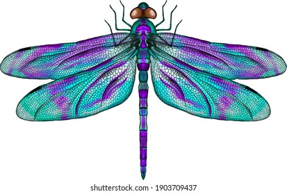 purple and blue dragonfly with delicate wings vector illustration