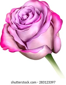 Purple Blue Rose Flower, Sexy and beautiful and rose bud isolated on white background. Vector illustration