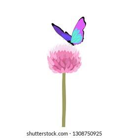 Purple butterfly on allium flower vector isolated