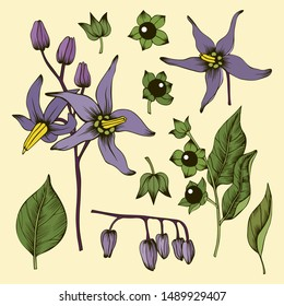 Purple deadly nightshade flowers, green leaves, buds and berries on beige background. Set of hand drawn vector floral elements