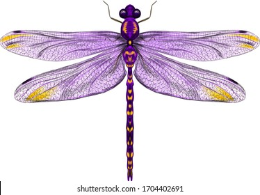 purple dragonfly with delicate wings vector illustration