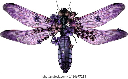 purple dragonfly in flowers top view with wings, sketch vector graphic color illustration on white background