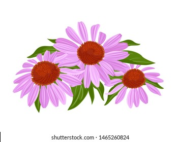 Purple flowers and green leaves. Echinacea blooming bouquet isolated on white background. Vector illustration in cartoon flat style.