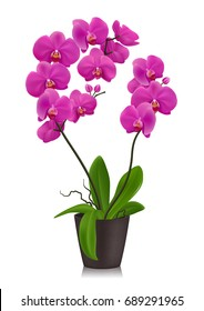 Purple orchid in flowerpot design concept  in realistic style on white background isolated vector illustration