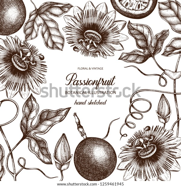 Purple Passionfruit Hand Drawn Illustration Engraved Stock Vector