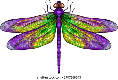 purple and yellow dragonfly with delicate wings vector illustration