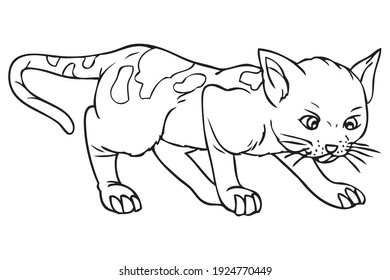 puss outline vector illustration, isolated on white background.animals top view