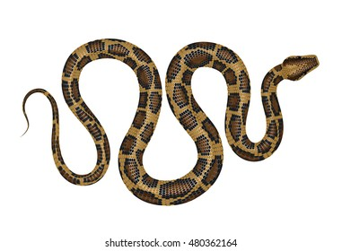 Python vector illustration. Tropical snake isolated on white background.